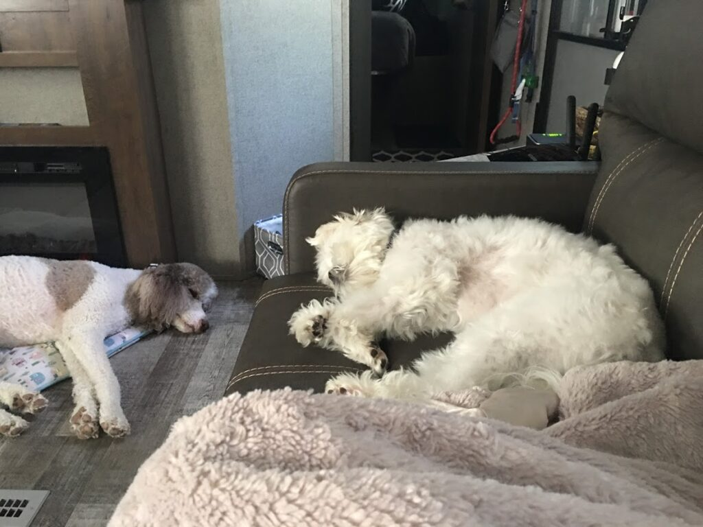 Lionel & Chance napping